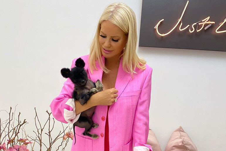 Caroline Stanbury Pet Dog