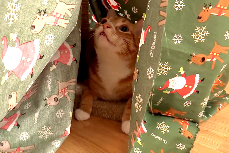 Christmas Tree Alternatives For Cat Owners.10 Alternatives To Christmas Trees For Cat Owners Unleashed