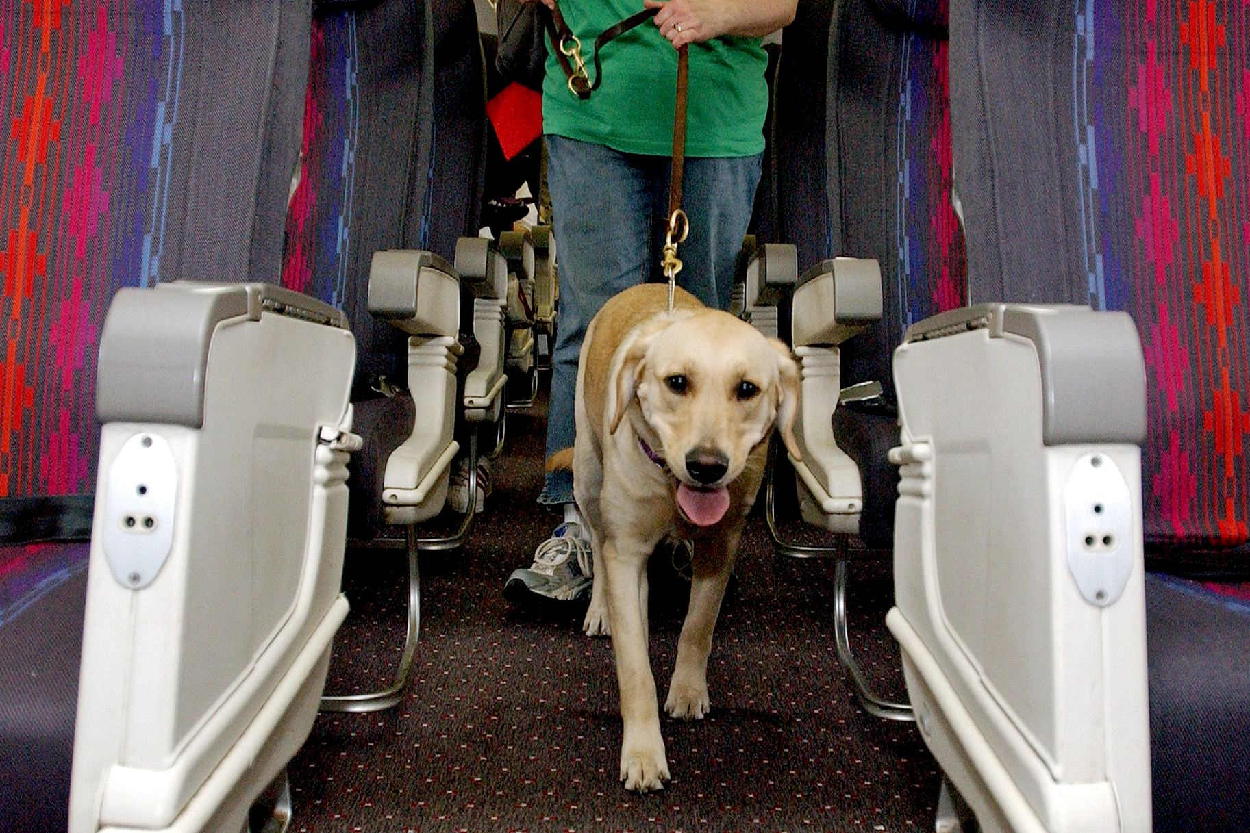 Which Airlines Have the Best Pet Policies?