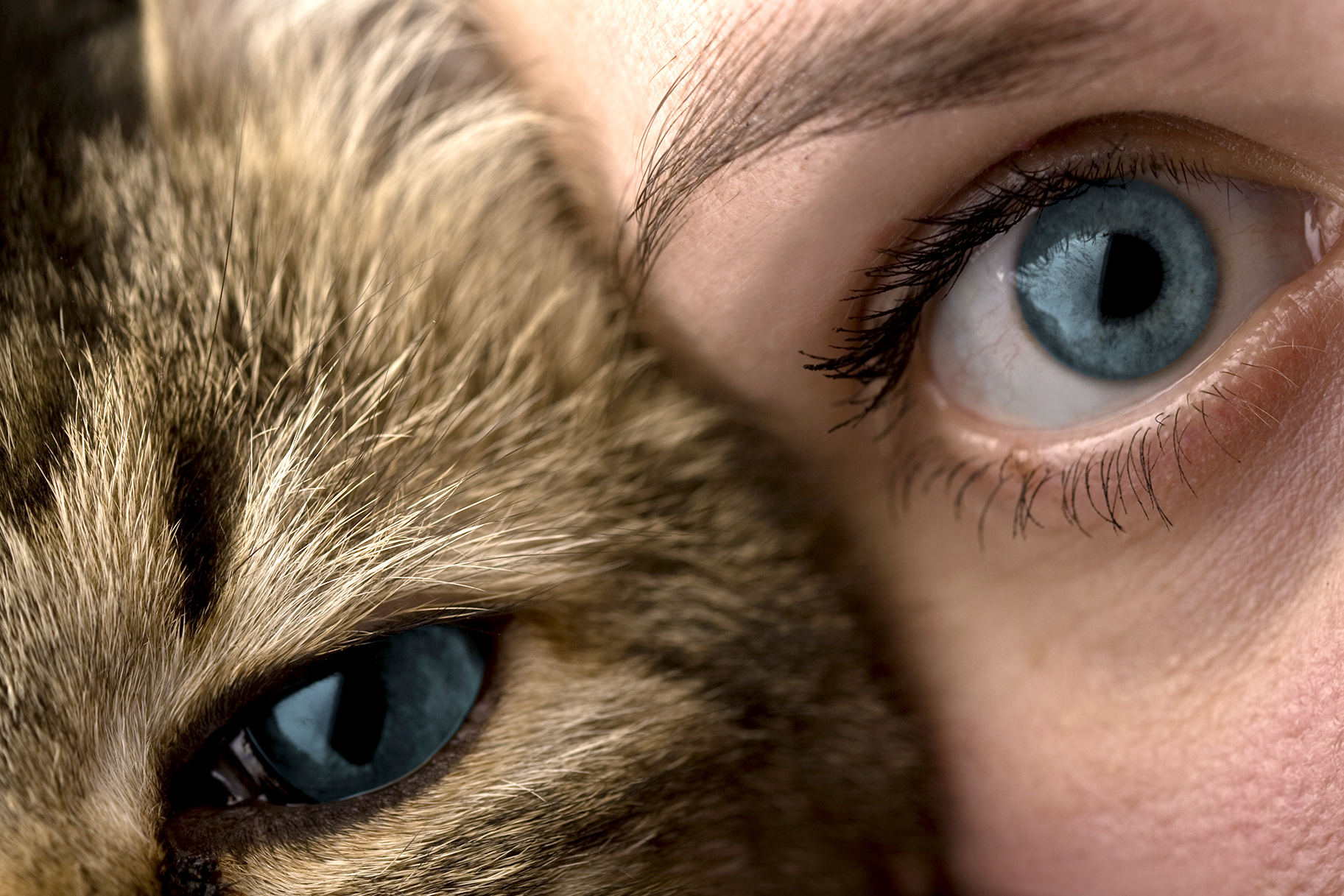 Can Cat Hair Make Your Eyebrows Look Fuller?   Style & Living