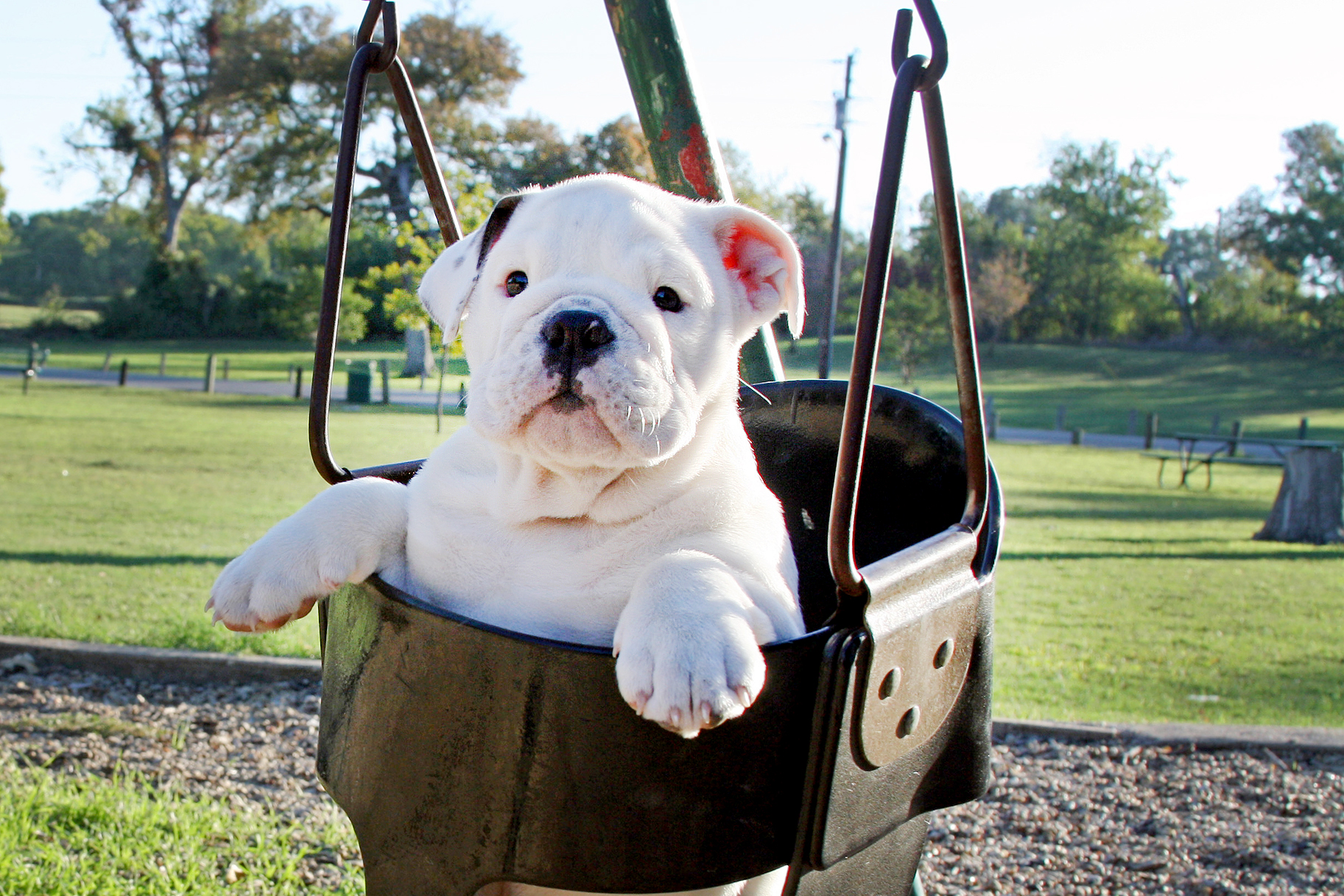 Summer Is in Full Swing — Especially for These Cute Swinging Pups