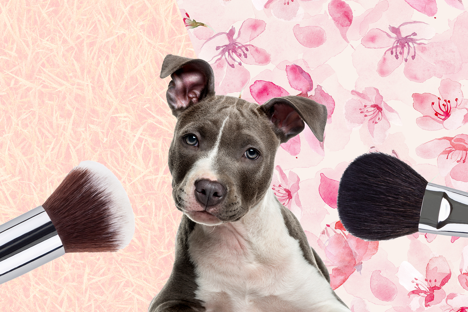 Dog Makeup Tutorials on Instagram: Dogs With Makeup Brushes