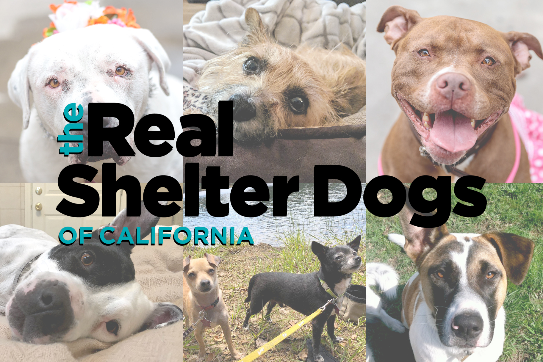 Meet the Real Shelter Dogs of California… and Then Go Adopt One!