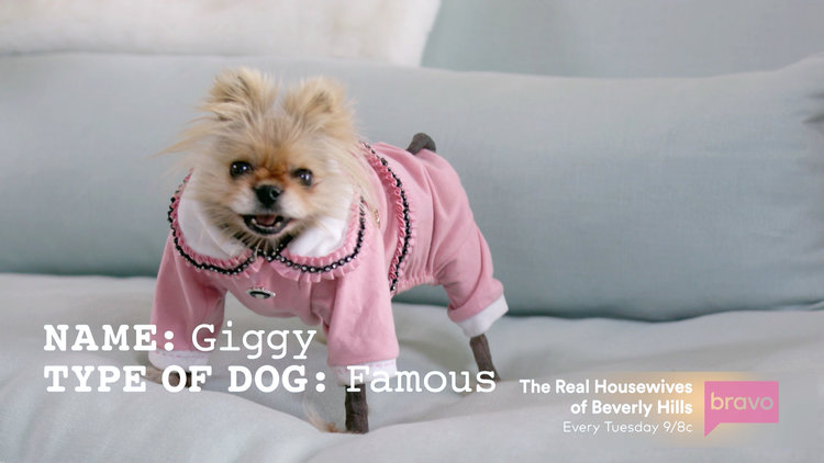 Lisa Vanderpump's Dog Giggy Is Living a Secret Life