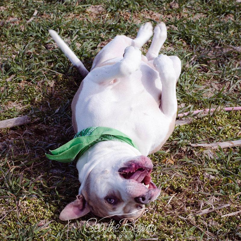 Speranza Animal Rescue: Adoptable Dogs in Pennsylvania | Unleashed