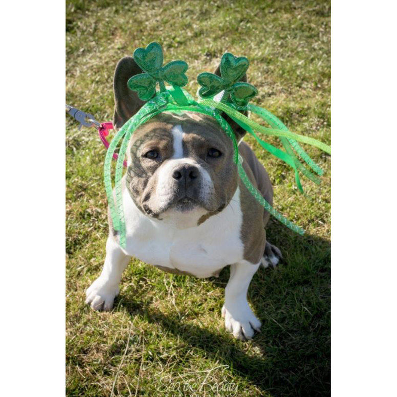 Speranza Animal Rescue: Adoptable Dogs in Pennsylvania