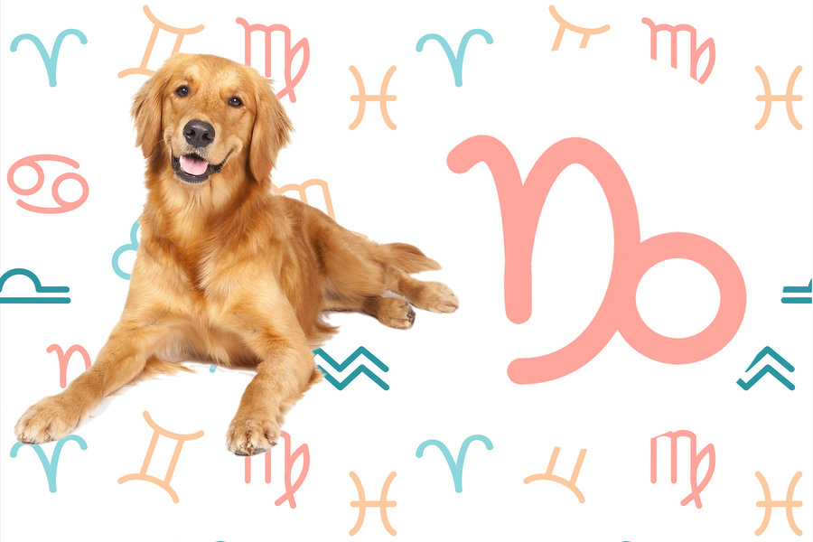 The Best Dog Breed for You Based On Your Horoscope Sign