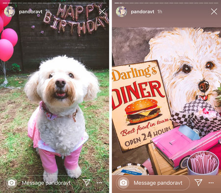 Pandora Dog Birthday 01