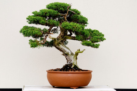 Now There's a Beer Flavored with $20,000 Bonsai Trees