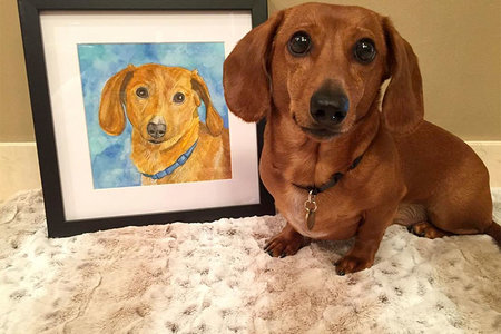 How to Make Your Dog Internet Famous: 5 Tips from Pumpkin the Doxie