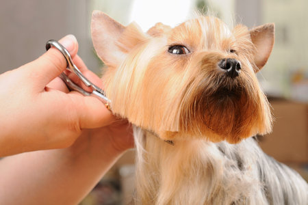 Do I Need to Tip a Dog Groomer? If So, How Much? | Unleashed