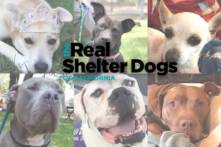 Dogs for Adoption in Orange County, California | Unleashed