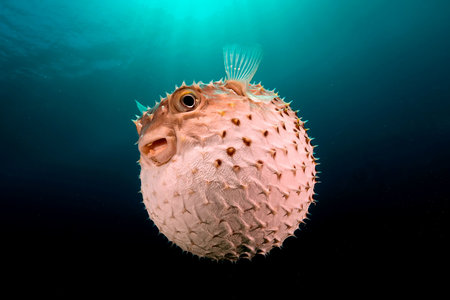 Image result for blow fish