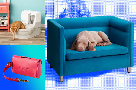 16 Ways to Spoil Your Cats, Dogs, and Furbabies of Every Kind
