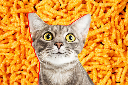 Police Officer Saves Cat Stuck In A Bag Of Cheetos Unleashed