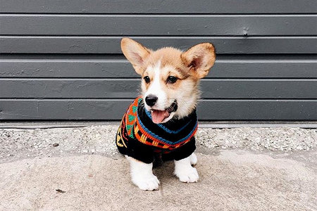 42940cce These Puppies Wearing Sweaters Are All You Need to Feel Warm in Your Heart