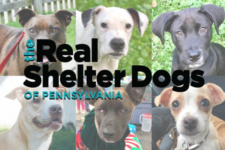Available Dogs To Adopt Furkid Rescue In South Park Pa Unleashed