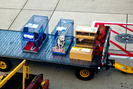 What Happens When You Put a Pet in Cargo? The Real Truth