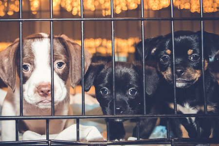 Maryland Wants to Ban Sales of Puppies and Kittens | Unleashed