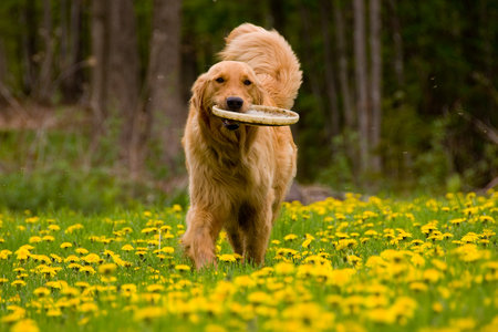 9 Indisputable Facts About Every Single Person Who Has a Golden Retriever