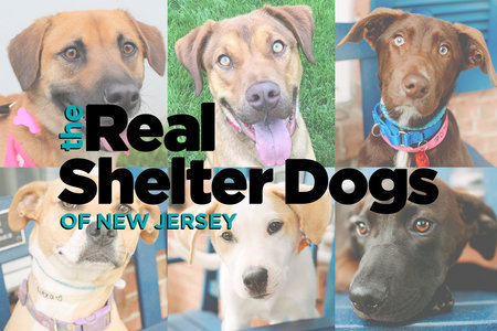 Meet The Real Shelter Dogs of New Jersey … And Then Go Adopt One!