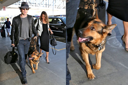 We Guarantee You Can't Read Nikki Reed and Ian Somerhalder's Tributes to Their Dog Without Crying