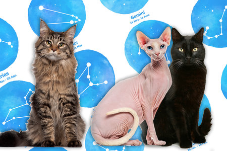 Cat Horoscopes: What Cat Should You Get Based on Zodiac Sign