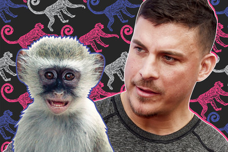 The Columbus Zoo Named a Monkey After Jax Taylor So BRB We're Off to Ohio