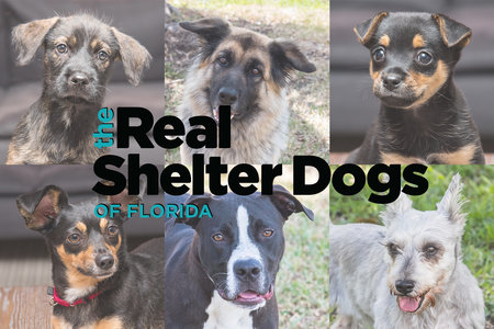 Meet the Real Shelter Dogs of Florida … And They're All Adoptable!