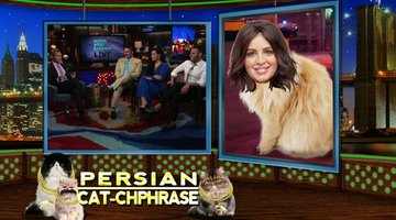 Persian Cat-chphrase