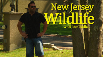 New Jersey Wildlife with Joe Giudice