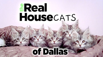 Introducing The Real Housecats of Dallas