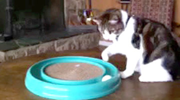 Cheezburger Picks: Cat vs. Ball