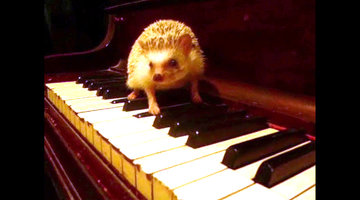 Cheezburger Picks: Hedgehog Makes Music