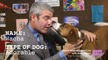 Andy Cohen's Dog Wacha Has Some Major Secrets