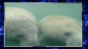 #RHOM Presents 'Grey's A Manatee'