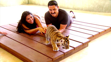 The Shahs Play with Tiger Cubs!