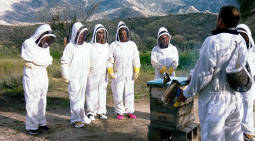 The RHOC Ladies Are Getting Bee Therapy