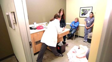 Unseen Moment: Lisa Takes Hanky to the Vet