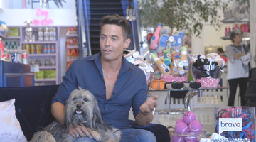 Vanderpump Dogs: One Year Later