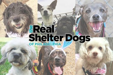 Shelter Dogs in Washington D C  Up for Adoption | Unleashed