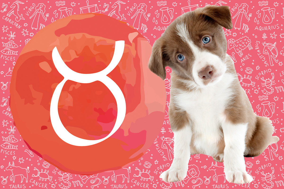 What's My Dog's Horoscope: Astrology for Dogs | Unleashed