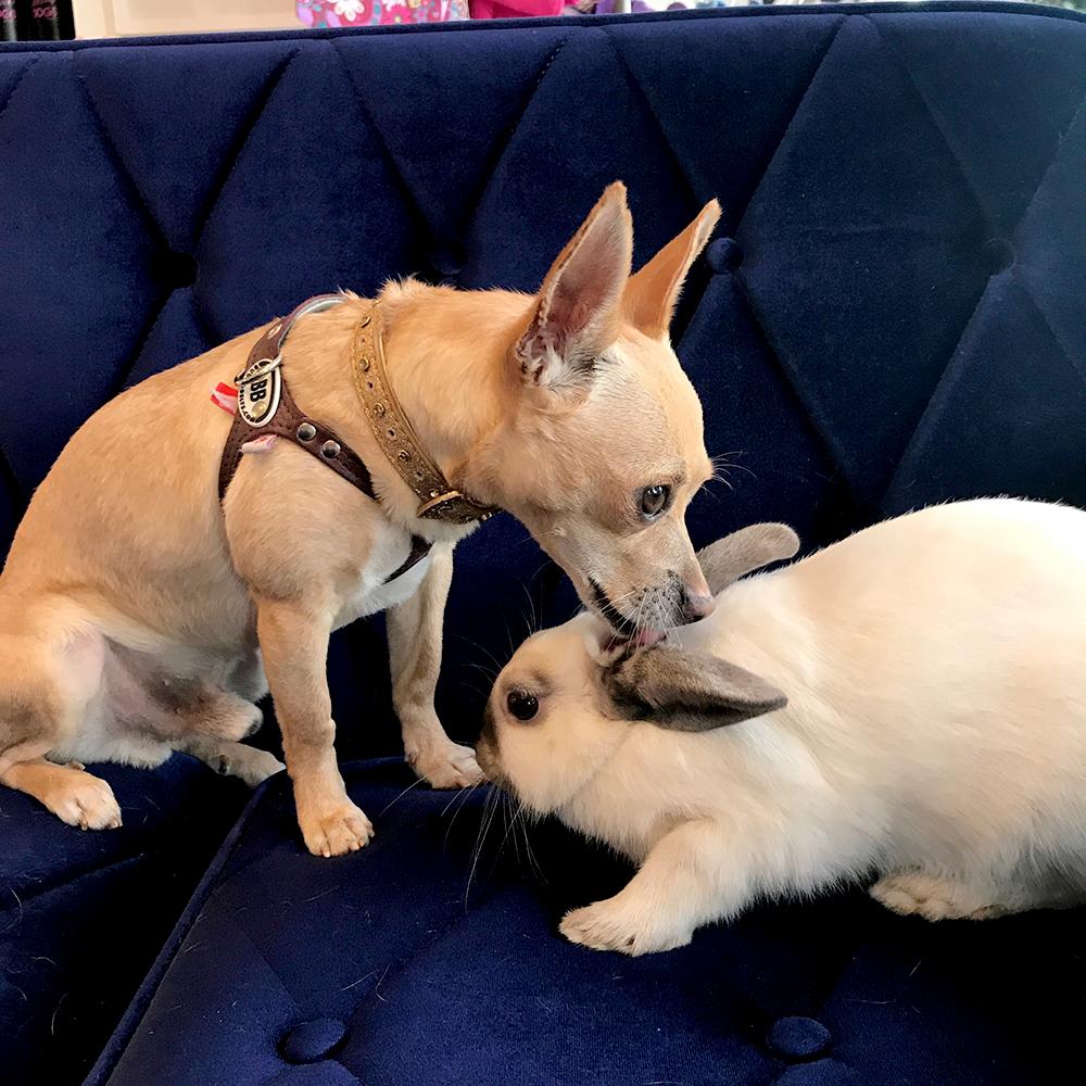 Bonded Dog and Rabbit at Vanderpump Dog Rescue Center | Unleashed